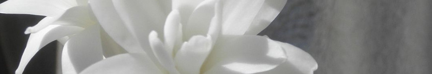 Significado flor angélica