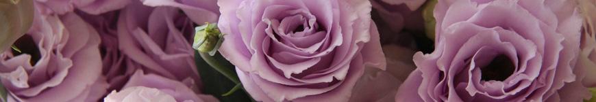 Significado flor lisianto