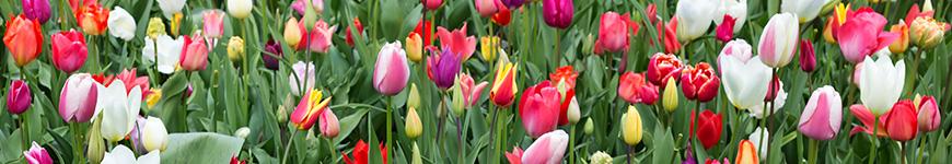 Significado flor tulipa